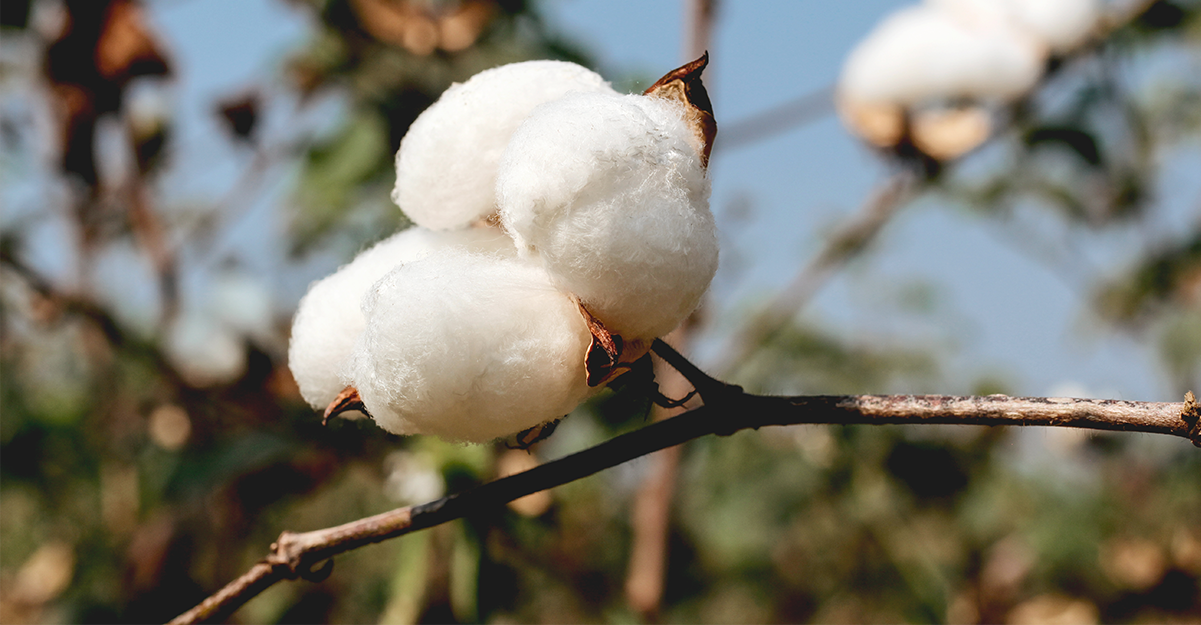 The Importance of Switching to Organic Cotton